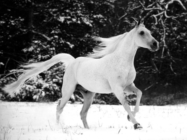 cavalloneve